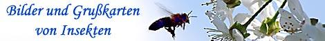 Bilder von Insekten